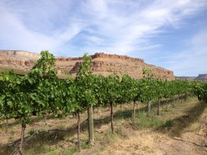 Colterris Winery
